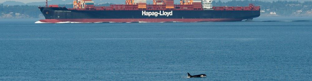 Cargo ship with whale