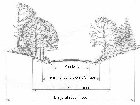 Trees and Shrubs